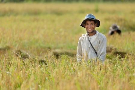 Gelukkig boer in rijstveld, Thailand Stockfoto