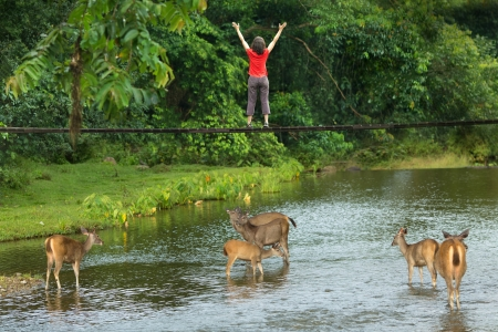 asia deer: Woman standing on a bridge with his arms open wide with a herd of Samba deer (Cervus unicolor) drinking in the stream below in a lush landscape in Thailand