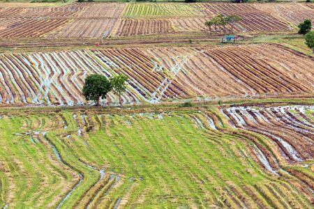 floodplain: Asian rice field pattern after harvest season, Thailand