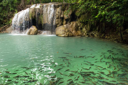 Erawan first level waterfall with fishes swimming in clear water, Thailand photo