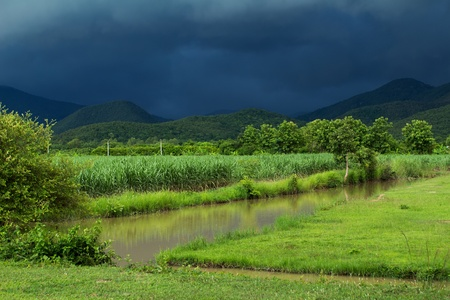 monsoon clouds: Sugar cane field under dramatic stormy weather in rainy season, Thailand