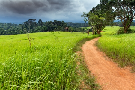 Tropical meadow under dramatic stormy sky in Khao yai national park, Thailand photo