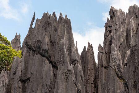 palawan: Detalles n�tidos de piedra caliza de la costa de Palawan en Filipinas