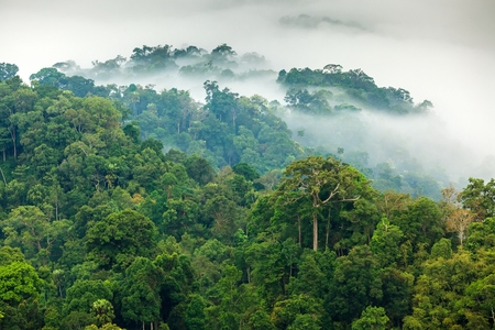 Morning fog in a wild tropical rainforest in Kaeng Krachan national park, Thailand Фото со стока - 27987574