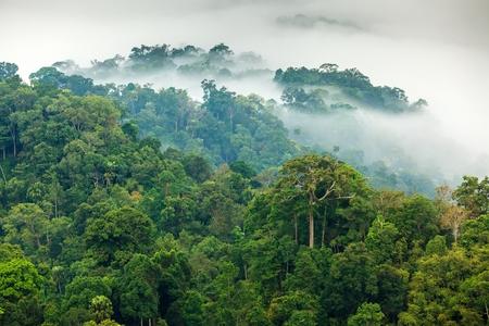 Morning fog in a wild tropical rainforest in Kaeng Krachan national park, Thailand
