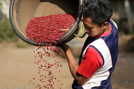 sort out: BAN NONG TONG, THAILAND, NOVEMBER 19 : Unidentified farmer from a Lisu tribe filtering the new red beans harvest in the village of Ban Nong Tong, north Thailand, on November 19, 2012 Editorial