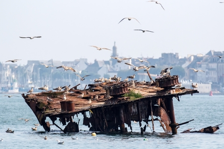 sunken boat: Rusty ship wreck from world war II and seagulls in the port of Lorient, Brittany, France