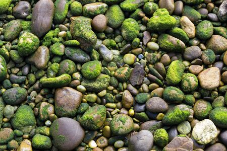 Rocks covered with seaweed at low tide on a shore photo