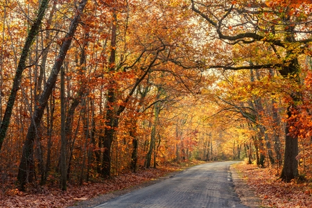 temperate: Road passing through a beautiful temperate forest at fall, France