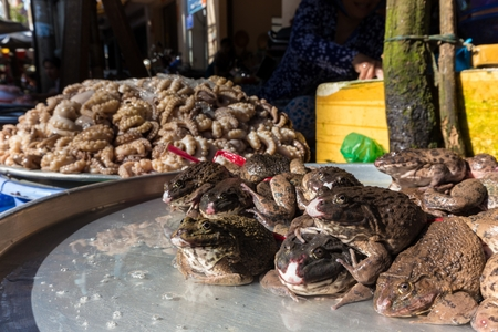 alive: Alive toads on stall in a traditional Vietnamese street market
