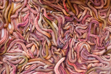 frightful: Sand worms in Vietnamese market, ingredient for local traditional food