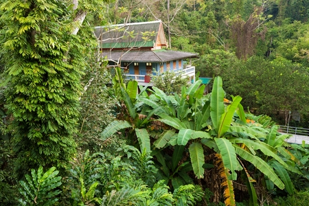 asian house plants: Buddhist home dormitory in jungle, temple of Wat Tham Pha Plong, Chiang Dao, Thailand