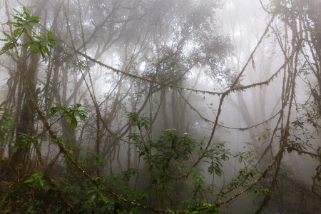 Foggy jungle in the Chiang Dao Thailand mounts