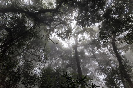 the view from below: Misty tropical forest in early morning, perspective view from below