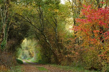 temperate: Colorful path in a temperate forest in France during fall season