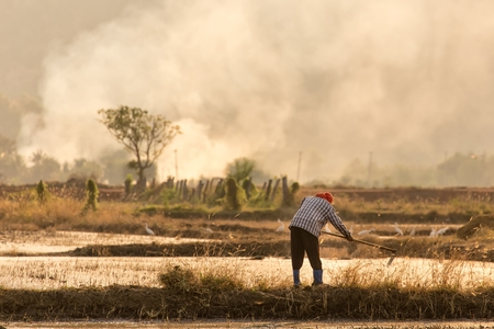 ploughing field: Thai farmer ploughing a rice field at sunset in the Kanchanaburi province, Thailand