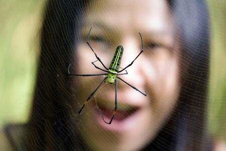 arachnoid: Woman surprised and scared by a tropical golden orb spider, Thailand Stock Photo
