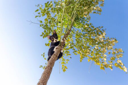mischievous: Funny cat climbing at the tree and observing down, focus on the face.