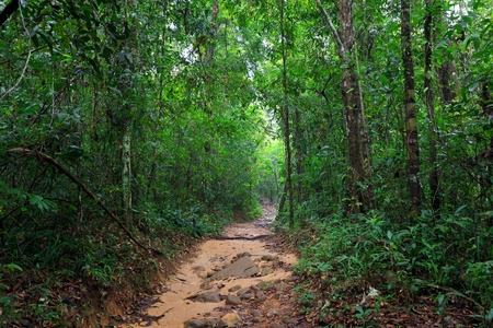 mook: Path in the wet and deep jungle of Ko Mook island in Thailand