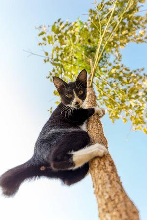 observing: Funny cat climbing at the tree and observing down, focus on the face.