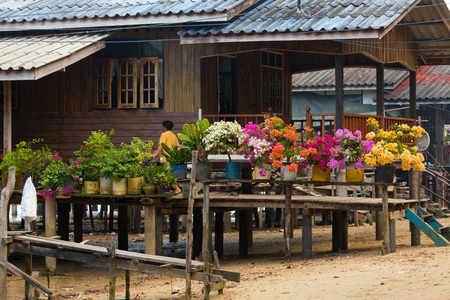 mook: Colorful bougainvillea flowers in flowerpots on home terrace in Ko Mook island, Thailand Stock Photo