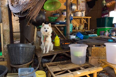 messy kitchen: Dog in a traditional and messy Thai kitchen
