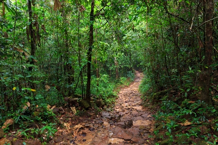 kood: Path in the wet and deep jungle of Ko Kood island in Thailand