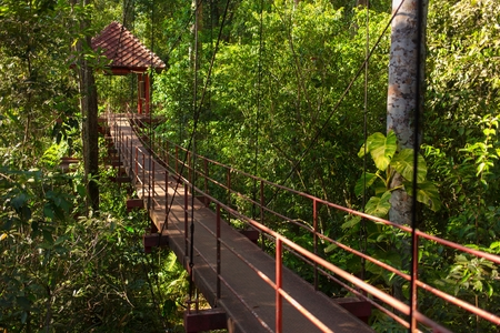 canopy: Canopy walk in a tropical rainforest in Thailand