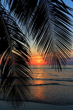 kood: Tropical sunset over palm tree at the khlong Chao beach in Ko Kood island, Thailand