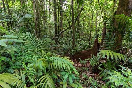kood: Deep wet jungle in Ko Kood island, Thailand