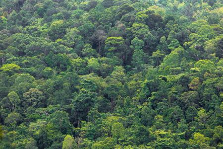 Kubah 国立公園、マレーシア、ボルネオ島の熱帯雨林