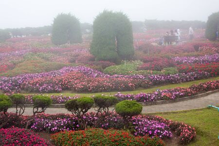 ornamental garden: Impatiens bedflowers in a royal ornamental garden, Thailand