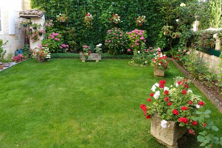 lush: French garden with deep green lawn, virginia creeper, hydrangea and geranium flower Stock Photo