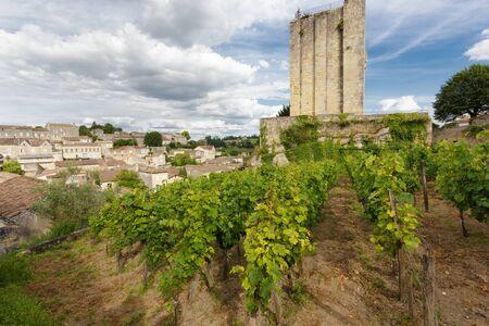saint emilion: Vineyard in the Saint Emilion village near an old medieval tower, France