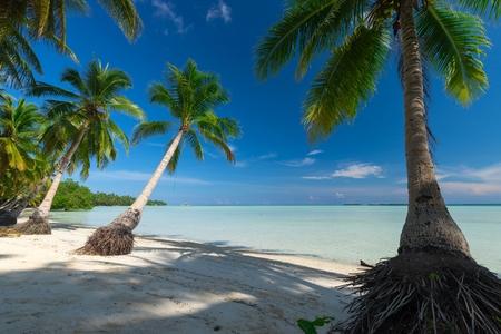 낙원은 Ohoidertawun, Kei Kecil 섬, 말루 쿠, 인도네시아의 열대 해변을 버렸다. 스톡 콘텐츠