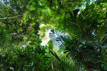 De weelderige junglevegetatie van het Taman Negara-regenwoud, Maleisië