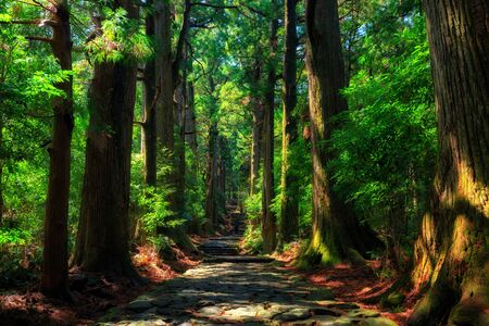 Beautiful and old cypress forest at Daimonzaka, Japan