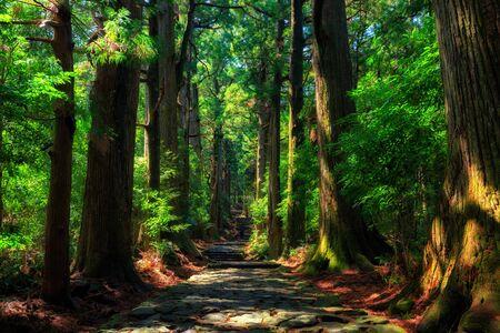 Schöner und alter Zypressenwald bei Daimonzaka, Japan Standard-Bild