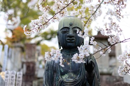 Buddha statue and cherry tree flowers in a Japanese cemetery, Kyoto.