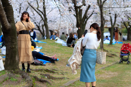 OSAKA, JAPAN, April 7, 2019 : Japanese are taking pictures under flowered cherry trees at the Kema Sakuranomiya Park to celebrate new spring . Publikacyjne