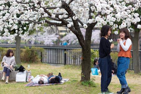 OSAKA, JAPAN, April 7, 2019 : Japanese women are taking selfie pictures under flowered cherry trees at the Kema Sakuranomiya Park to celebrate new spring . Publikacyjne
