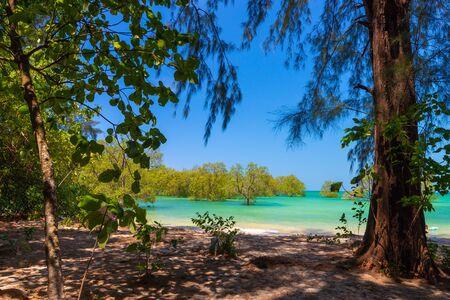 Idyllic tropical beach with huge trees in Ko Phayam island, Thailand Stok Fotoğraf