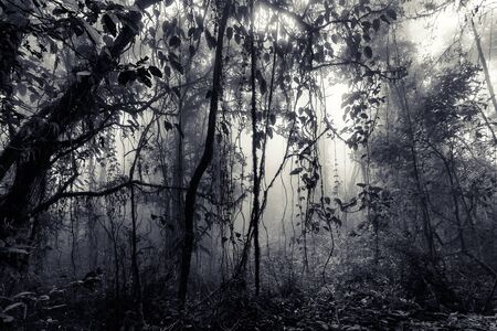 Misty tropical forest of Chiang dao in Thailand, vintageblue tinted edition, Chiang dao, Thailand