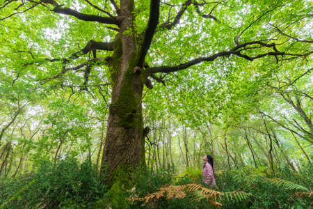 Little woman contempling a huge magical oak tree. Banco de Imagens