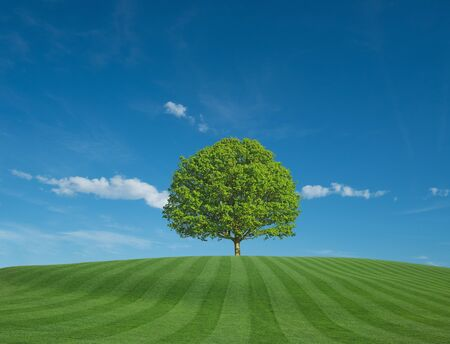 Green Field with Blue Sky and Tree on Horizon