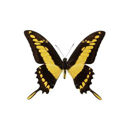 Butterfly isolated on white Reklamní fotografie