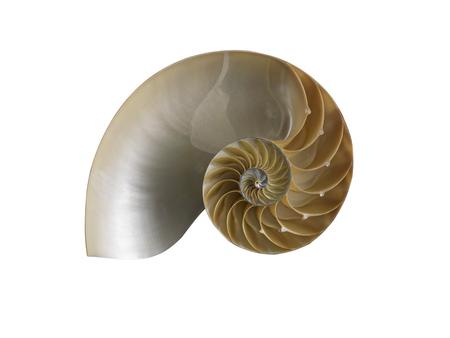 Nautilusshell op witte achtergrond wordt geïsoleerd die Stockfoto - 85158559