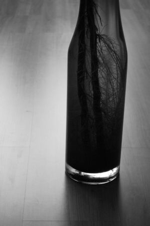 Bamboo roots in a vase photo