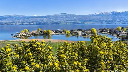 subdivision: Green Bay Lakefront Subdivision on Okanagan Lake West Kelowna British Columbia Canada with yellow flowering shrub in foreground Stock Photo