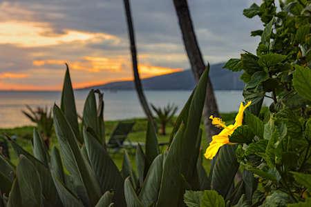 Hibiscus flower against the sunset Maui Hawaii USA